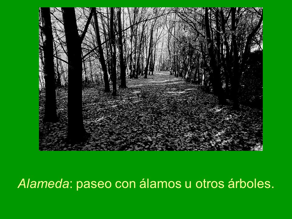 Alameda: paseo con álamos u otros árboles.