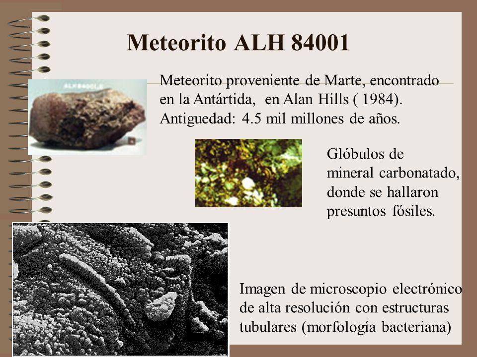 Meteorito ALH 84001 Meteorito proveniente de Marte, encontrado