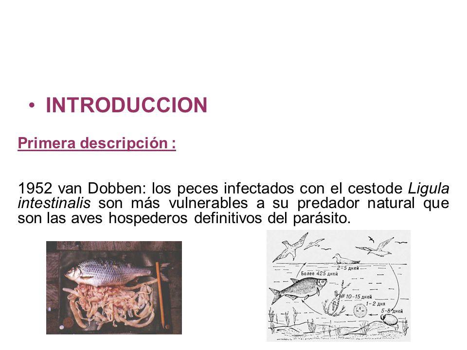 INTRODUCCION Primera descripción :