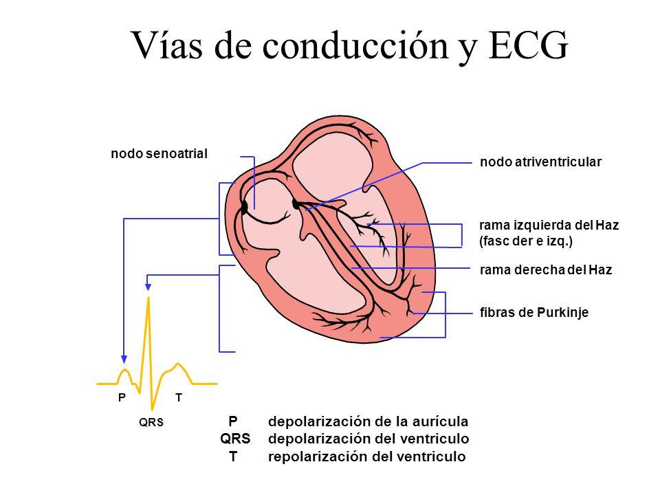 Vías de conducción y ECG