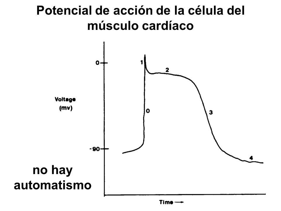 Potencial de acción de la célula del músculo cardíaco