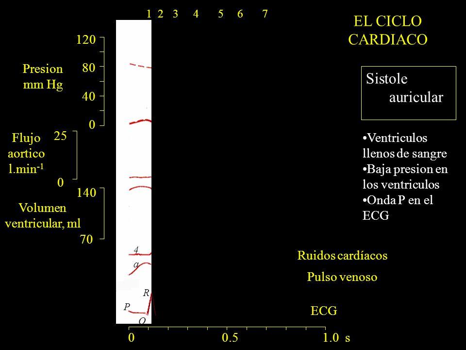 EL CICLO CARDIACO Sistole auricular 120 80 40 Presion mm Hg