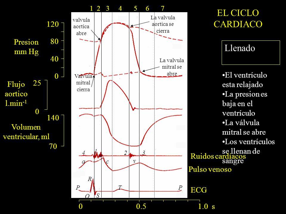 EL CICLO CARDIACO Llenado 120 80 Presion 40 mm Hg