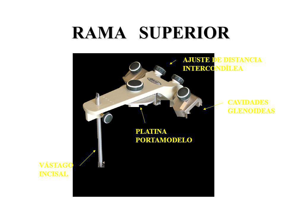 RAMA SUPERIOR AJUSTE DE DISTANCIA INTERCONDÍLEA CAVIDADES GLENOIDEAS