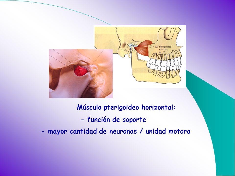 Músculo pterigoideo horizontal: