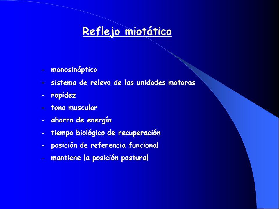 Reflejo miotático - monosináptico
