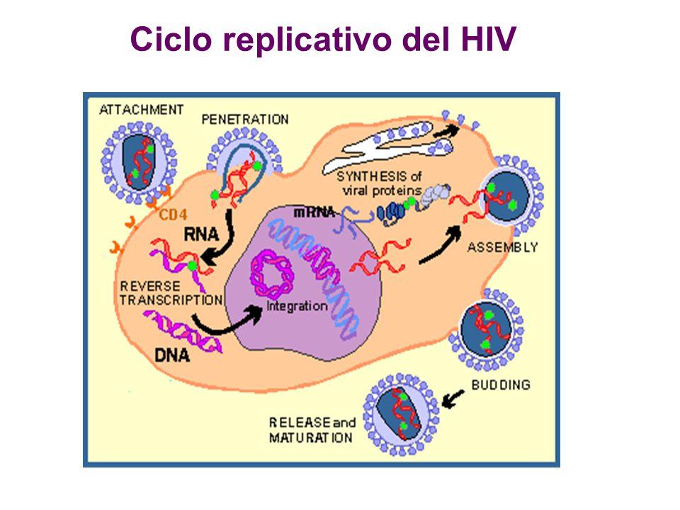 Ciclo replicativo del HIV