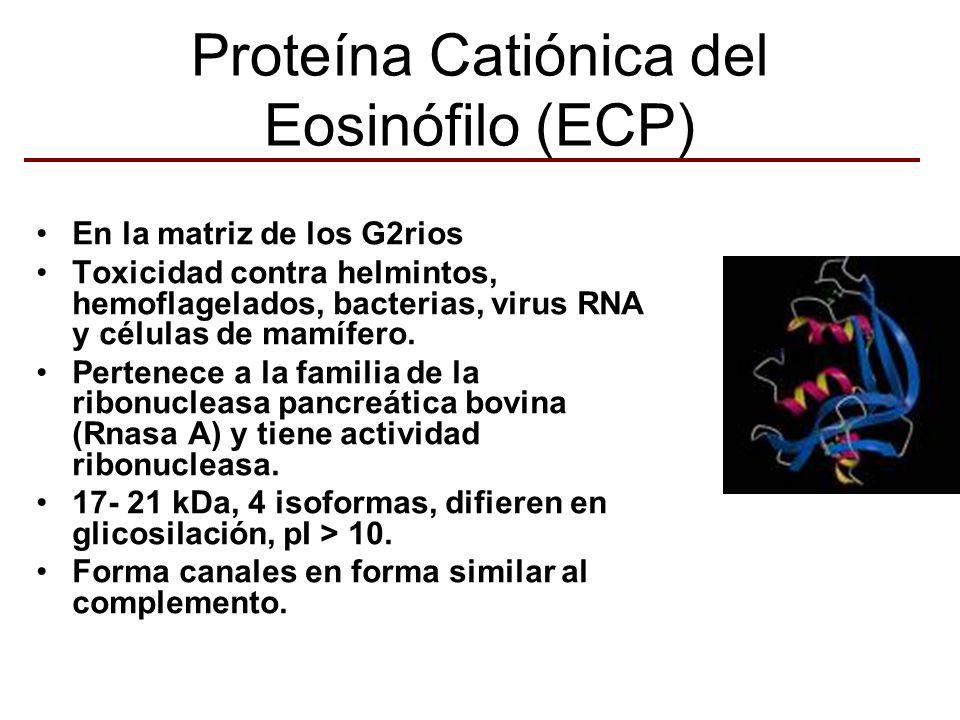 Proteína Catiónica del Eosinófilo (ECP)