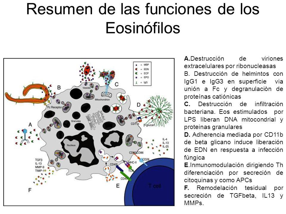 Resumen de las funciones de los Eosinófilos