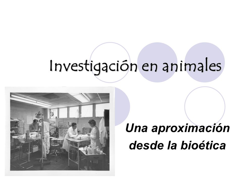 Investigación en animales
