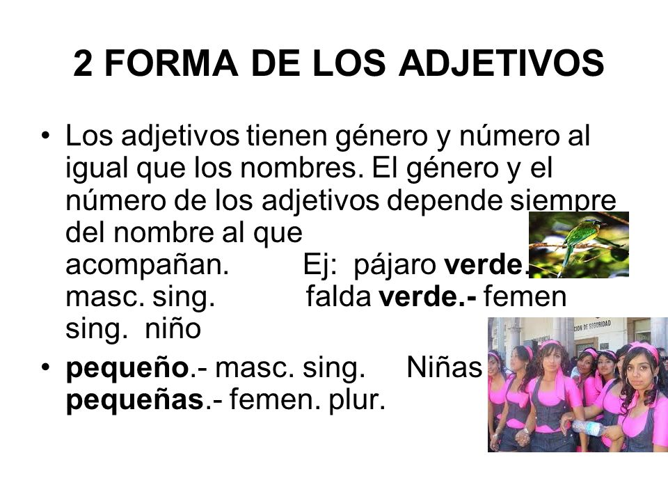 2 FORMA DE LOS ADJETIVOS