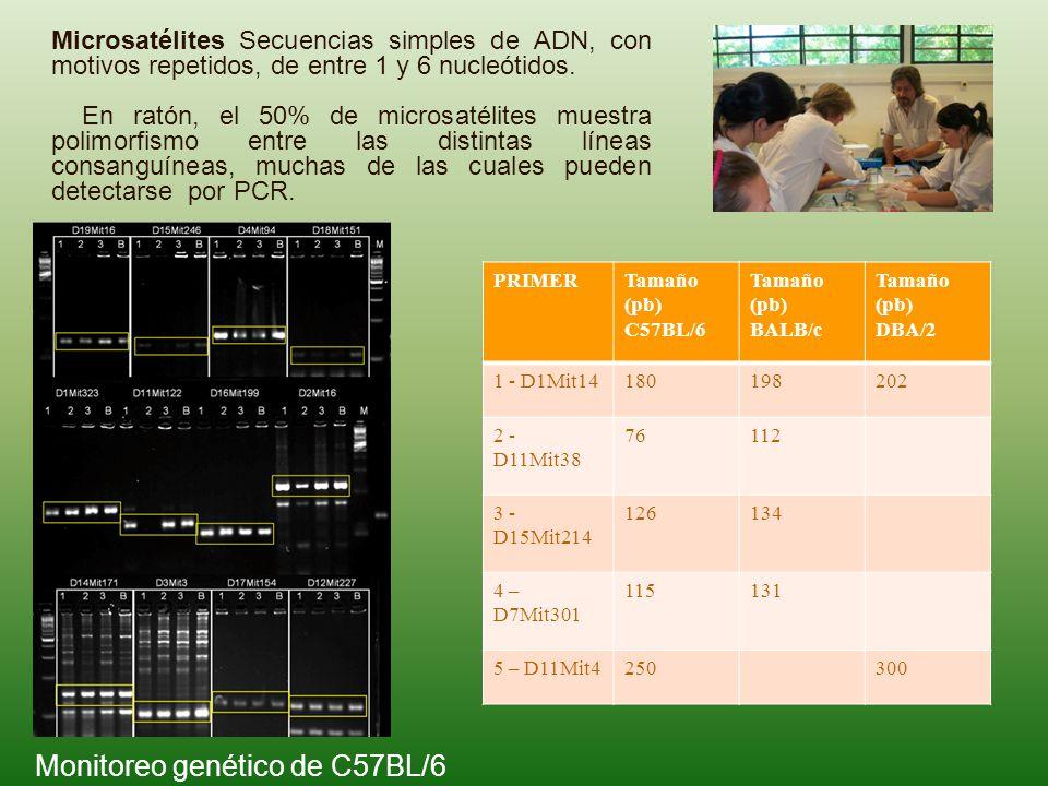 Monitoreo genético de C57BL/6