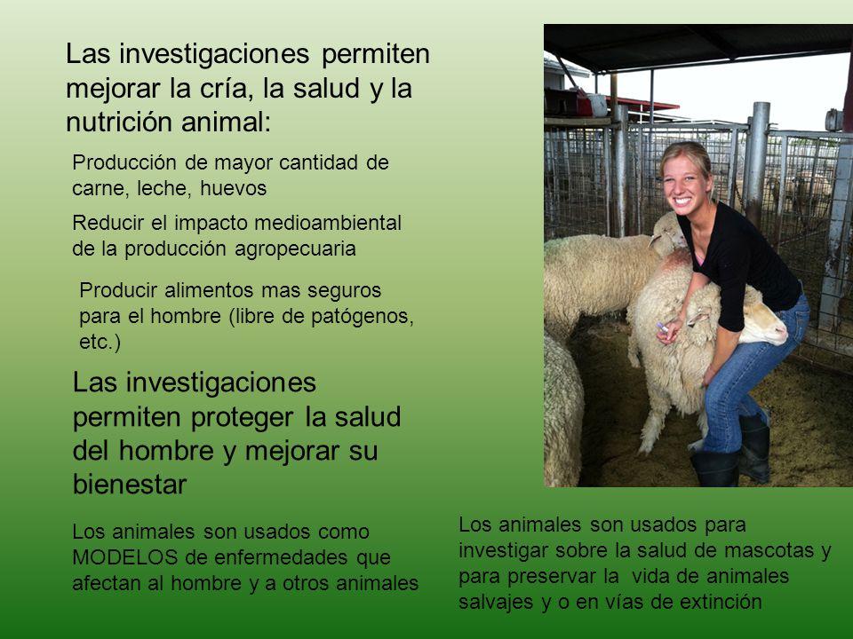 Las investigaciones permiten mejorar la cría, la salud y la nutrición animal: