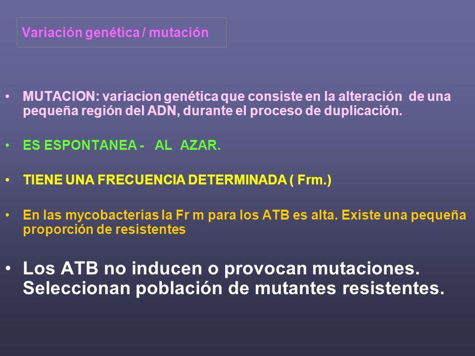 Variación genética / mutación