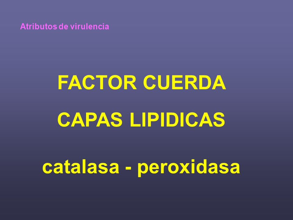 FACTOR CUERDA CAPAS LIPIDICAS catalasa - peroxidasa