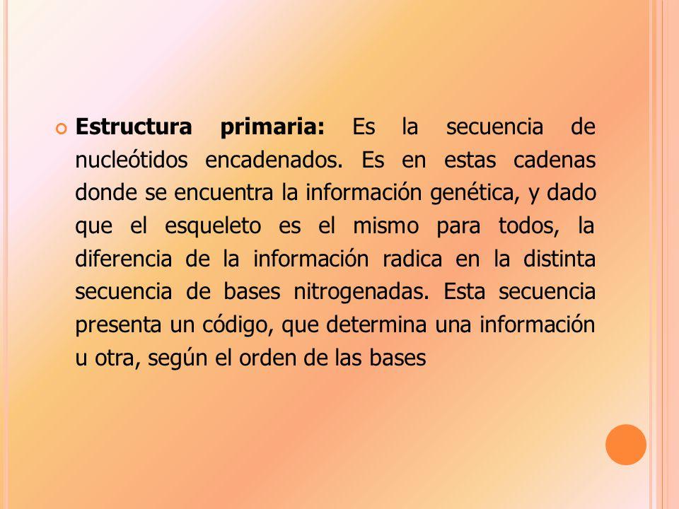 Estructura primaria: Es la secuencia de nucleótidos encadenados