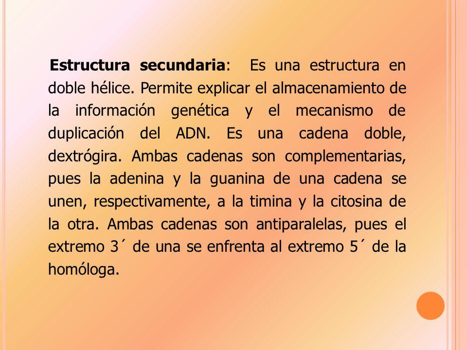 Estructura secundaria: Es una estructura en doble hélice