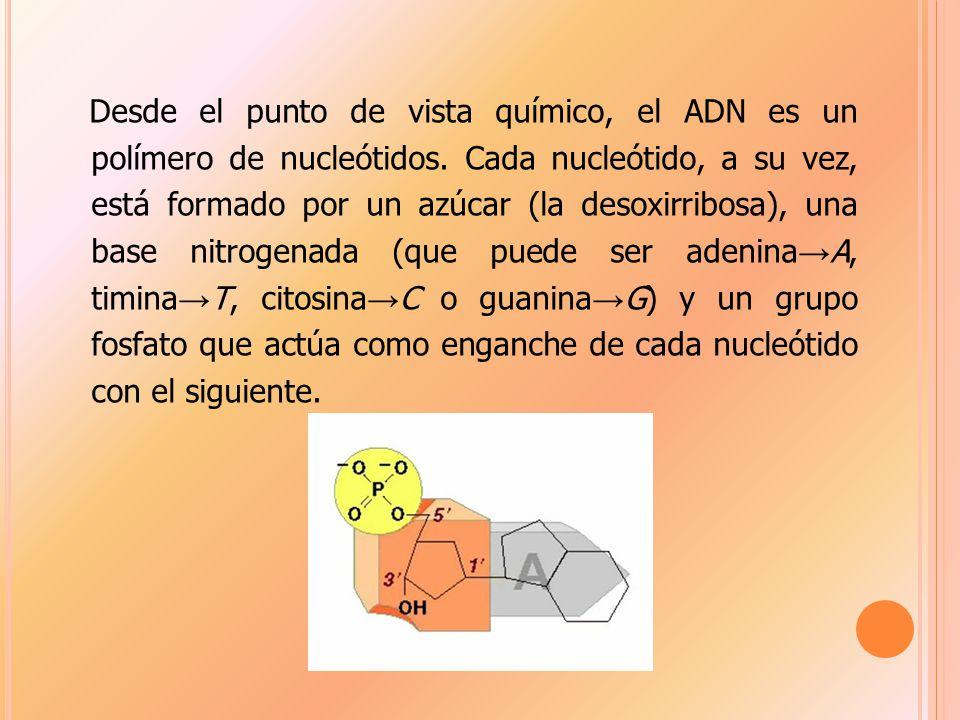 Desde el punto de vista químico, el ADN es un polímero de nucleótidos