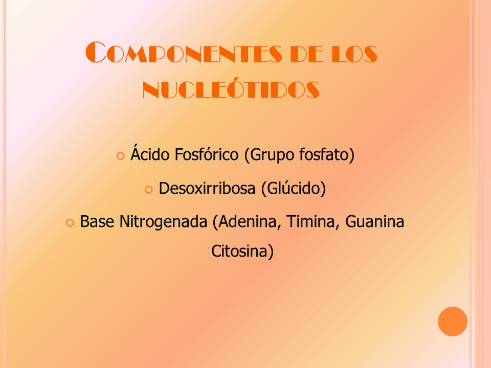 Componentes de los nucleótidos