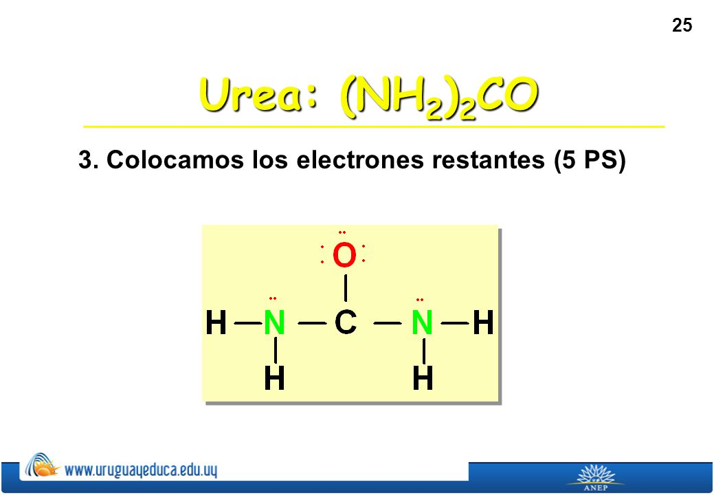 Urea: (NH2)2CO 3. Colocamos los electrones restantes (5 PS)
