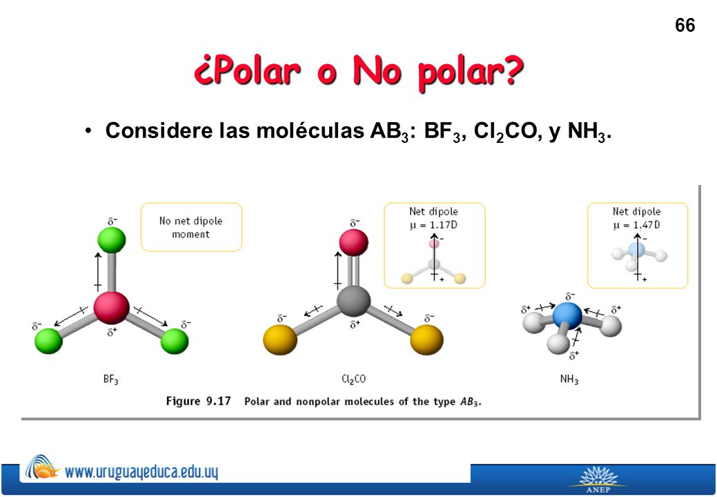 ¿Polar o No polar Considere las moléculas AB3: BF3, Cl2CO, y NH3.