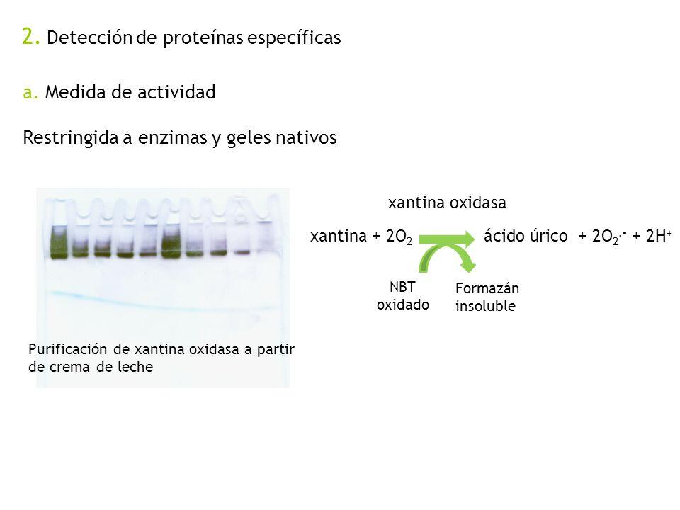 2. Detección de proteínas específicas