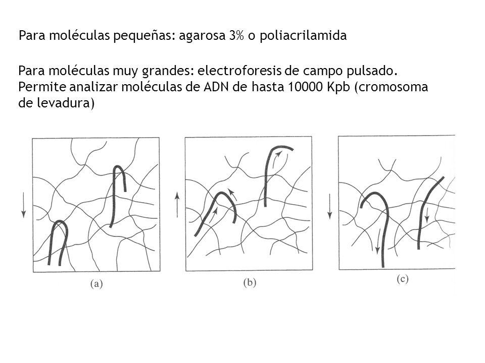 Para moléculas pequeñas: agarosa 3% o poliacrilamida