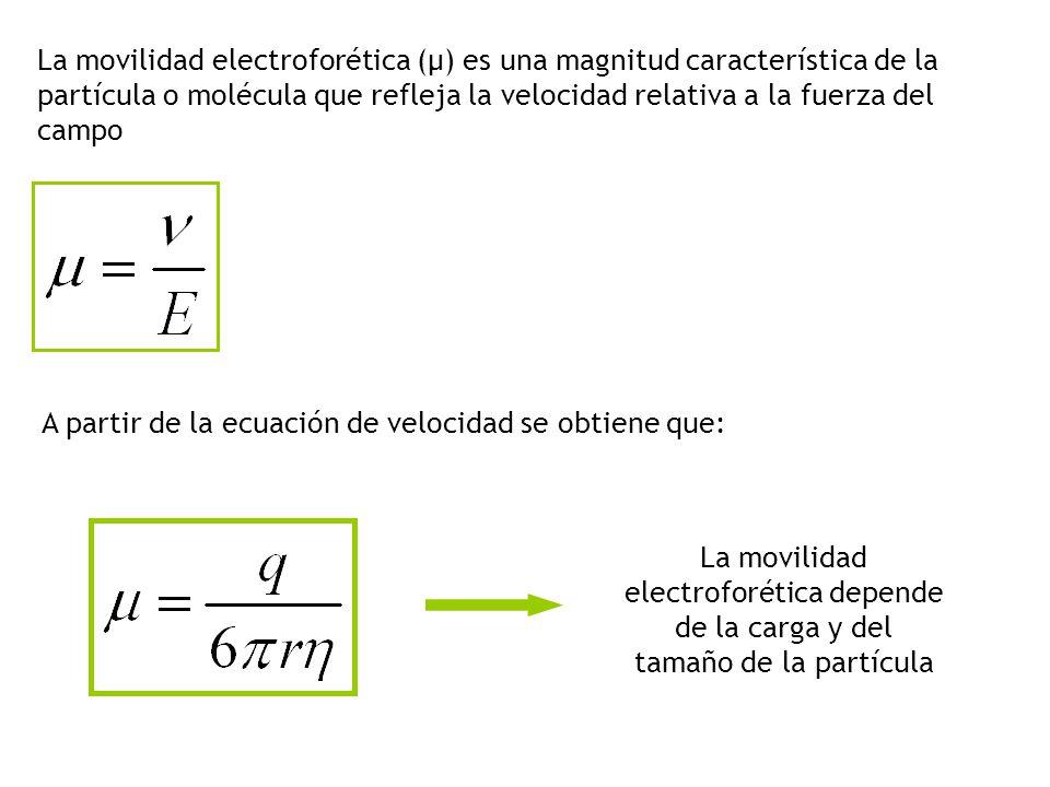 La movilidad electroforética (μ) es una magnitud característica de la partícula o molécula que refleja la velocidad relativa a la fuerza del campo