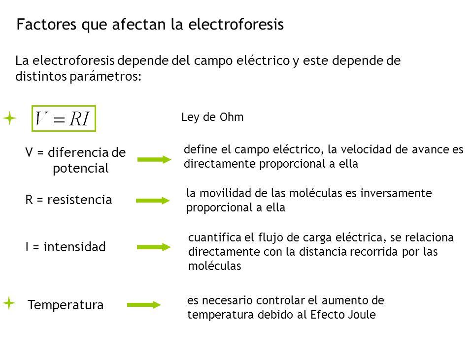 Factores que afectan la electroforesis