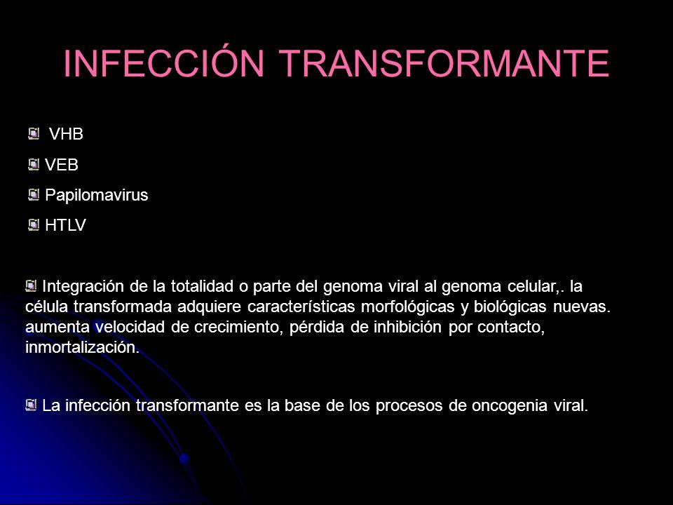 INFECCIÓN TRANSFORMANTE