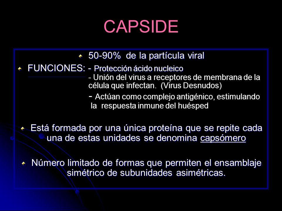 50-90% de la partícula viral
