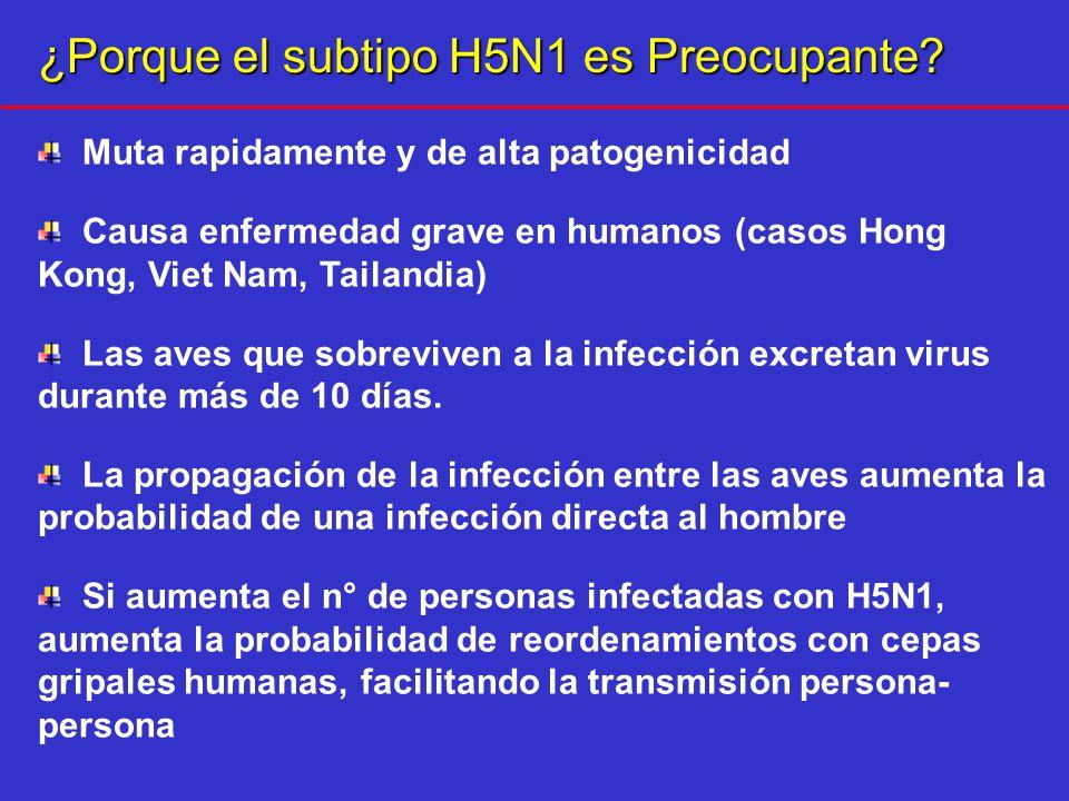 ¿Porque el subtipo H5N1 es Preocupante