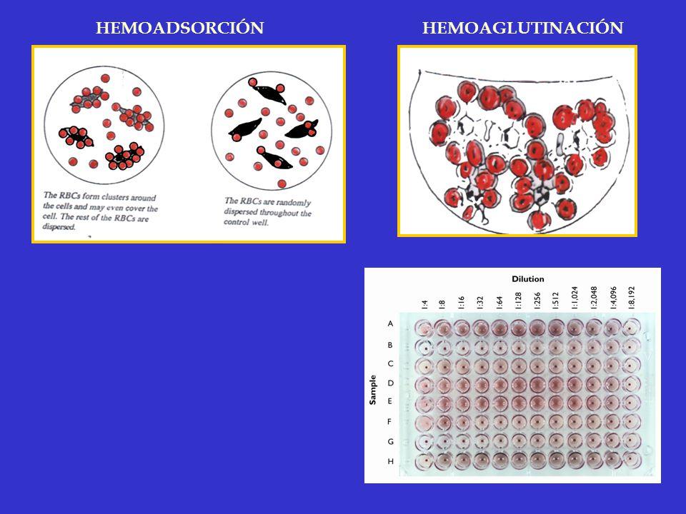 HEMOADSORCIÓN HEMOAGLUTINACIÓN