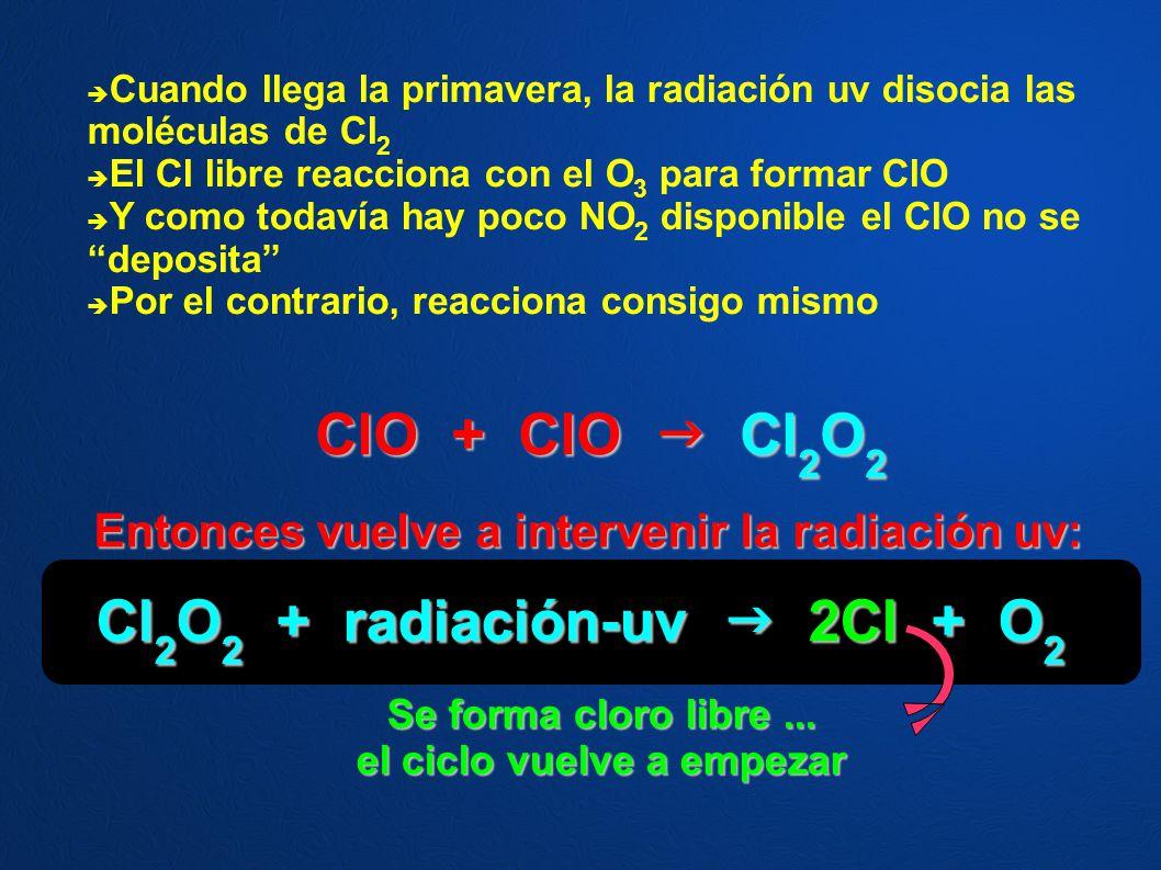 Cl2O2 + radiación-uv  2Cl + O2 el ciclo vuelve a empezar