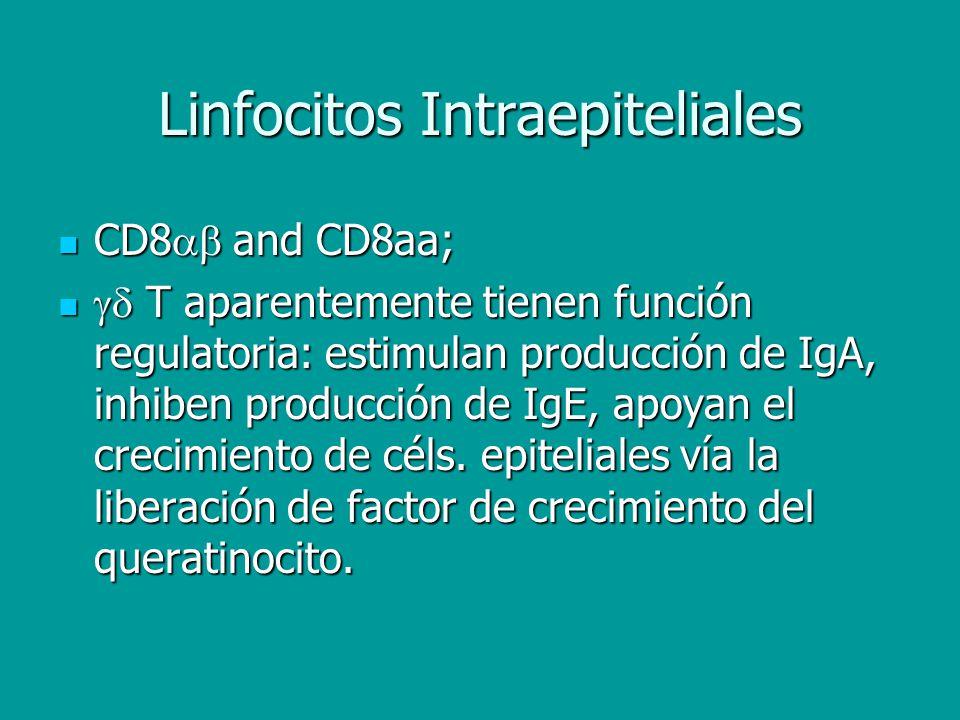 Linfocitos Intraepiteliales