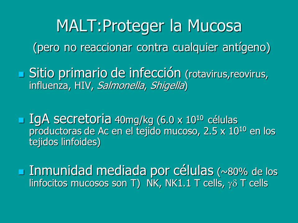MALT:Proteger la Mucosa (pero no reaccionar contra cualquier antígeno)