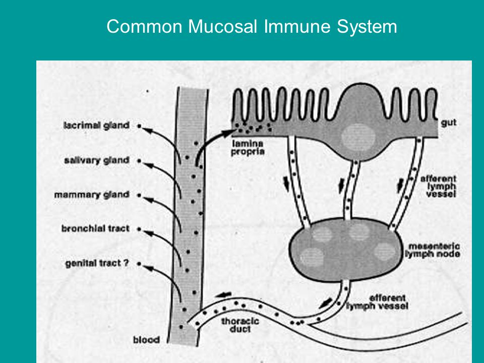 Common Mucosal Immune System