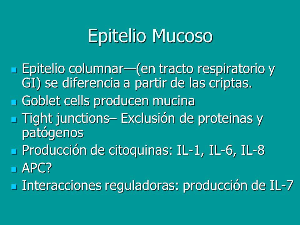 Epitelio Mucoso Epitelio columnar—(en tracto respiratorio y GI) se diferencia a partir de las criptas.