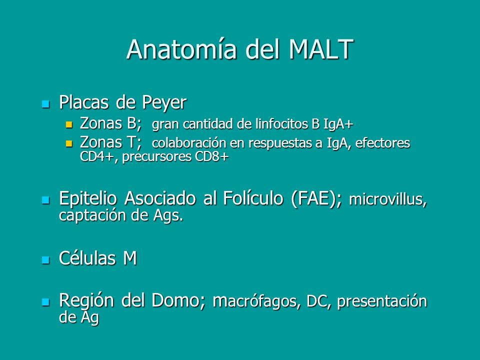 Anatomía del MALT Placas de Peyer
