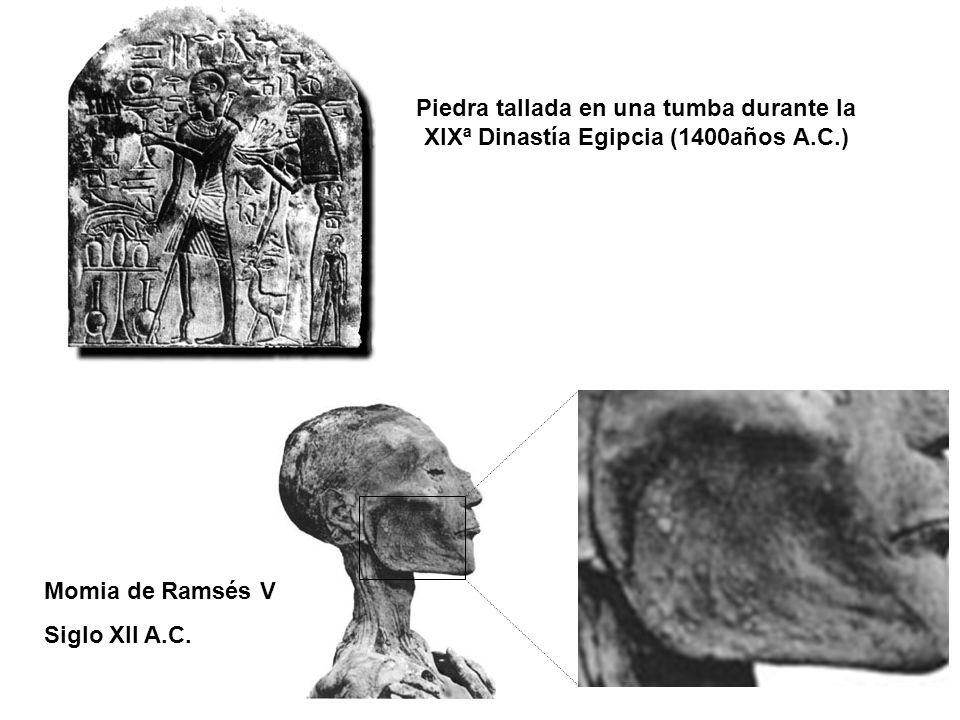 Piedra tallada en una tumba durante la XIXª Dinastía Egipcia (1400años A.C.)