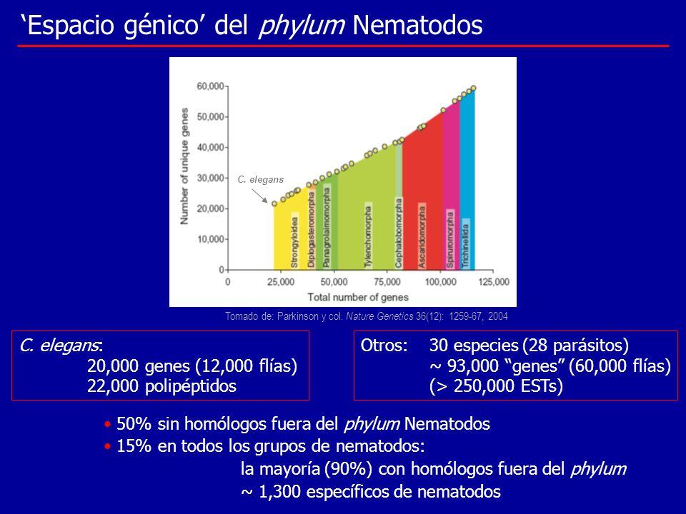 'Espacio génico' del phylum Nematodos