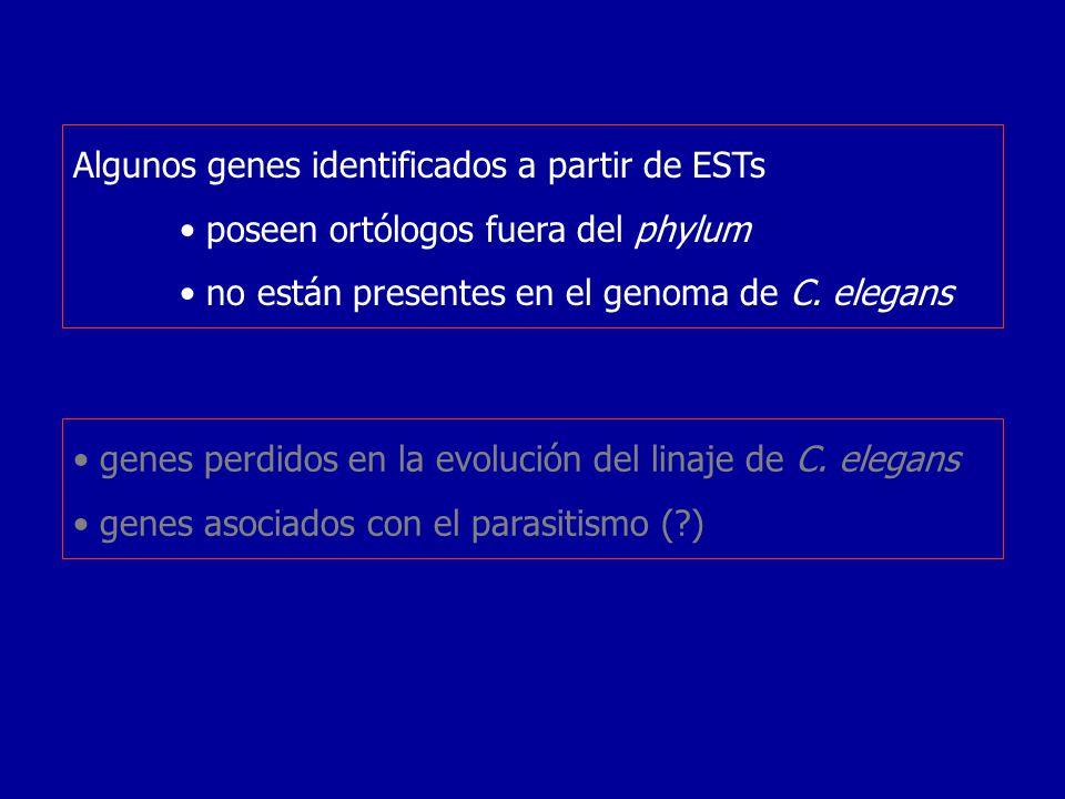 Algunos genes identificados a partir de ESTs