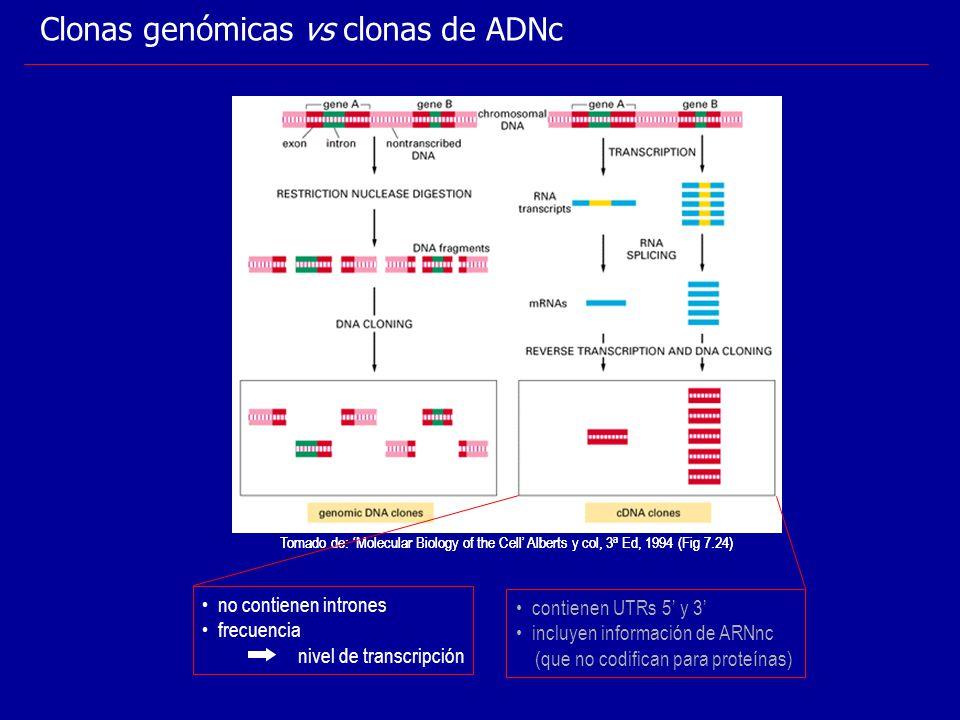 Clonas genómicas vs clonas de ADNc