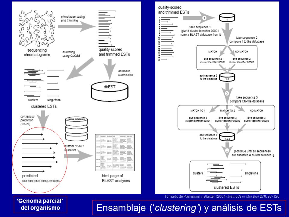Ensamblaje ('clustering') y análisis de ESTs