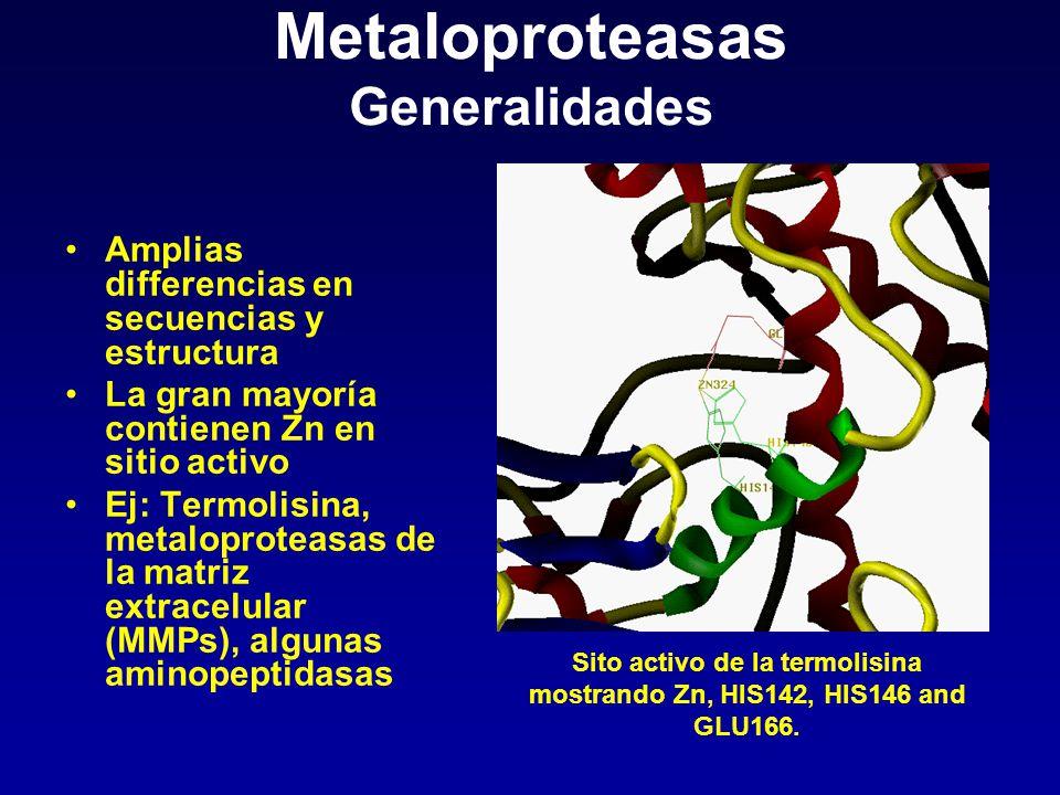 Metaloproteasas Generalidades