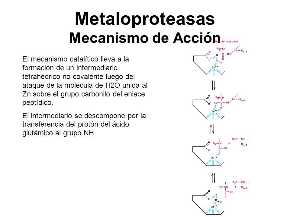Metaloproteasas Mecanismo de Acción
