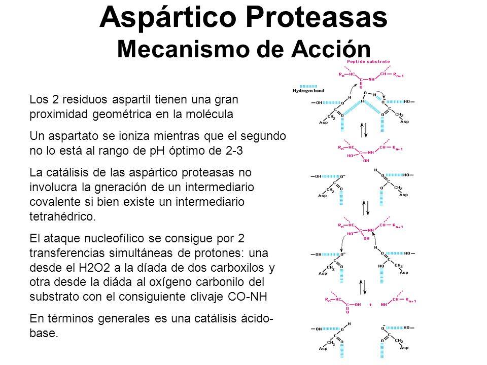 Aspártico Proteasas Mecanismo de Acción
