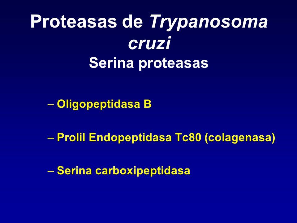 Proteasas de Trypanosoma cruzi Serina proteasas