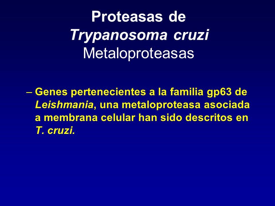 Proteasas de Trypanosoma cruzi Metaloproteasas