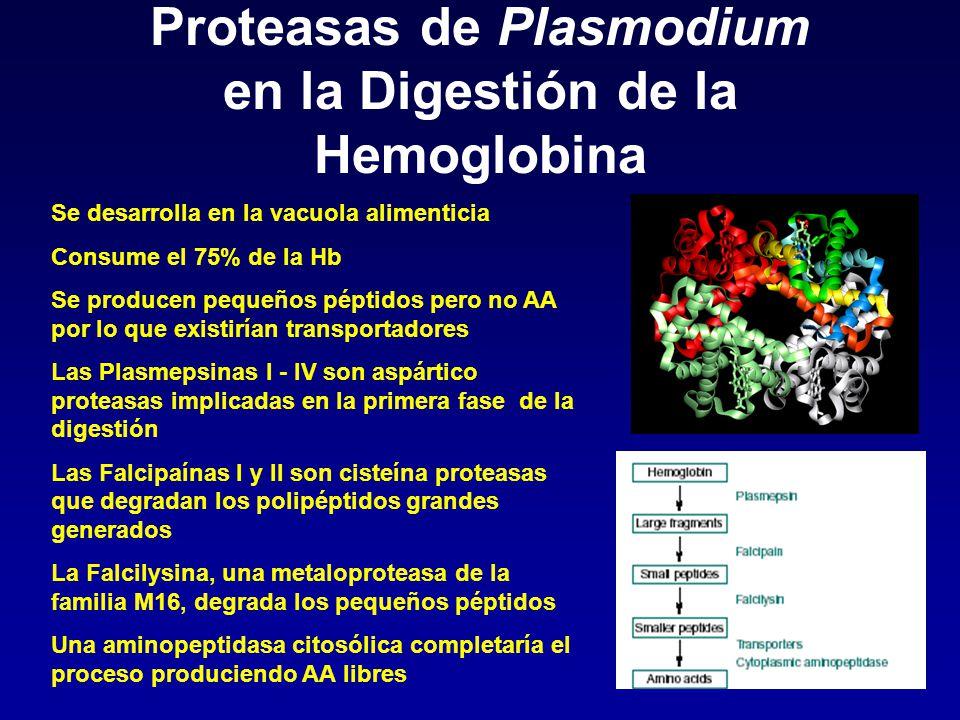 Proteasas de Plasmodium en la Digestión de la Hemoglobina
